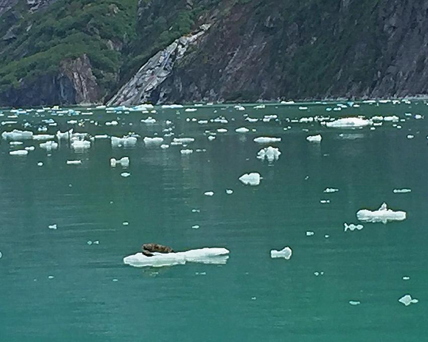 Disney Wonder Alaska Excursion Glaciar Endicott Arm 7